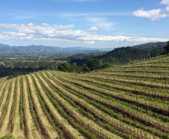 napa valley - californie