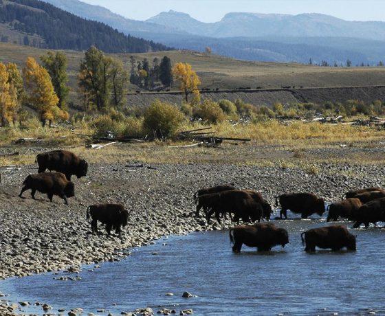 Yellowstone - Montana