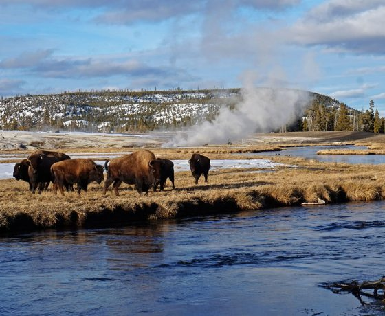 rocheuses canadiennes - yellowstone en rauqtte - hiver - voyage d'aventure- neige - rauqttes - voyages raquettes -chinook aventure